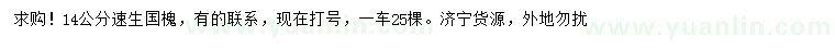国产亚洲Av在线14公分速生国槐