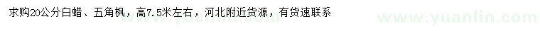 国产亚洲Av在线20公分白蜡、五角枫