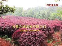 红花继木球,马褂木、杜英、喜树,杜梨(棠梨)皂角,重阳木