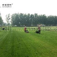 马尼拉草坪价格_马尼拉草坪产地_马尼拉草坪草皮苗圃基地