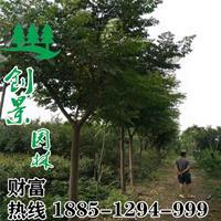 苦楝树价格 -苦楝树价格、批发报价、价格大全