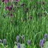 低价苦草、聚草、伊乐藻、狐尾藻等水生植物、沉水植物